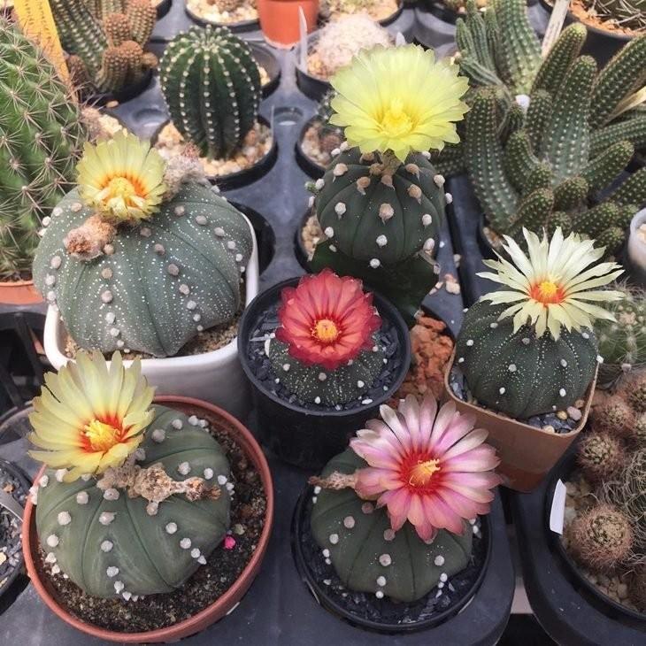 Com Flores1