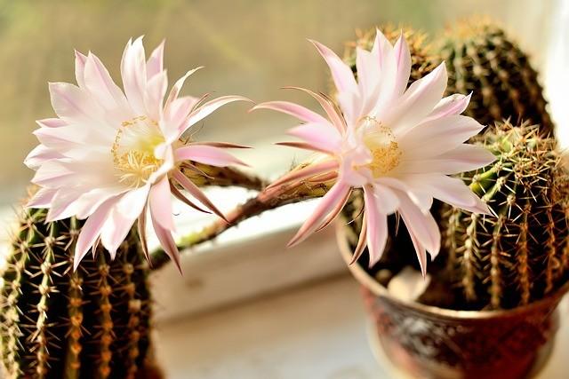Com Flores2