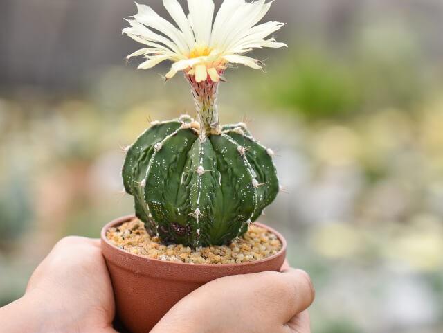 Com Flores3