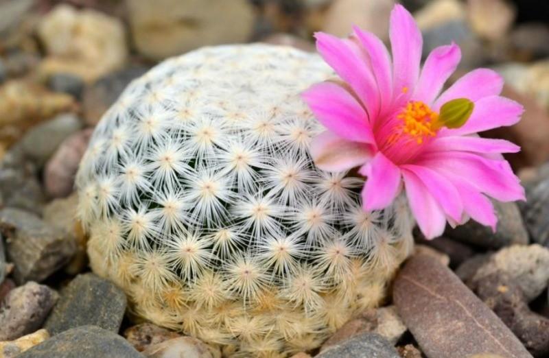 Com Flores4