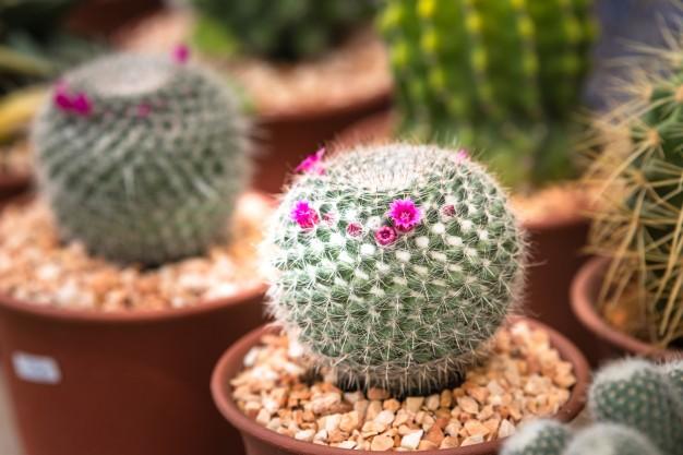 Com Flores6