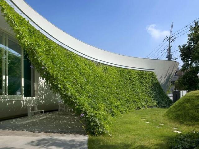 Jardim Vertical5